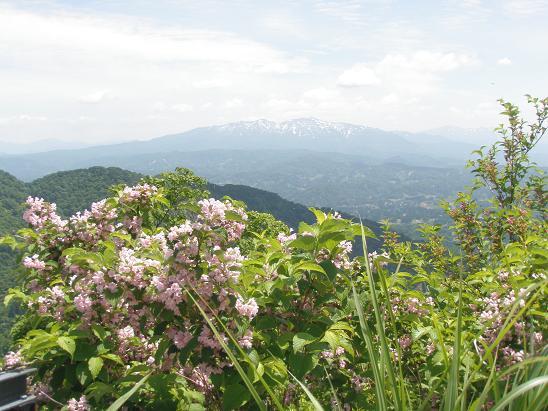 頂上少し八方台よりから大岳を望む