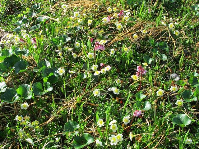 湿原に咲く花々