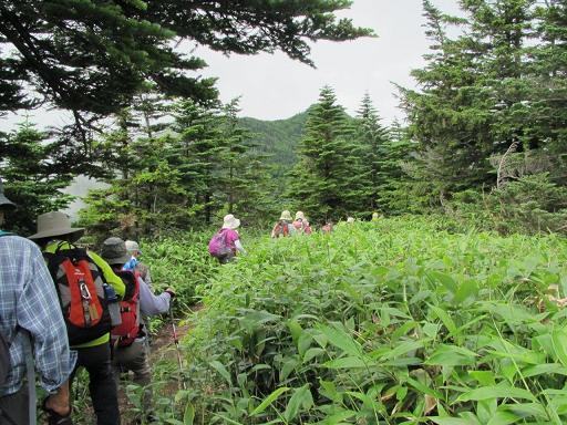 笹茂る稜線を歩く