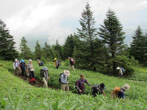 茨木山分岐付近を登る