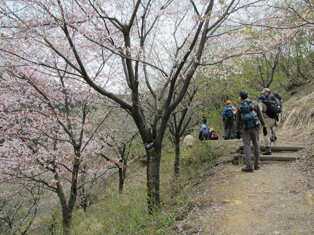 桜公園を下る