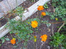 $なごみや ~ わかちあい日記 ~-オレンジの花