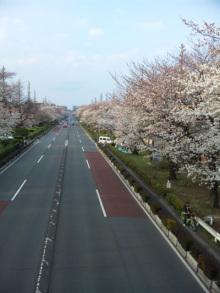$なごみや * わかちあい日記 *-国立桜2