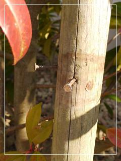 bamboo02.jpg