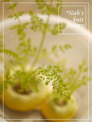 kinbiCarrot06.jpg