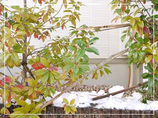 snow2014-08.jpg