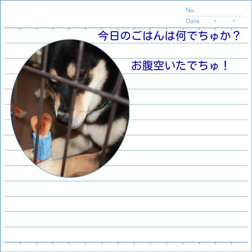 20130930221753586.jpg