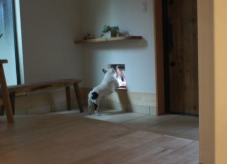 猫窓ったら!