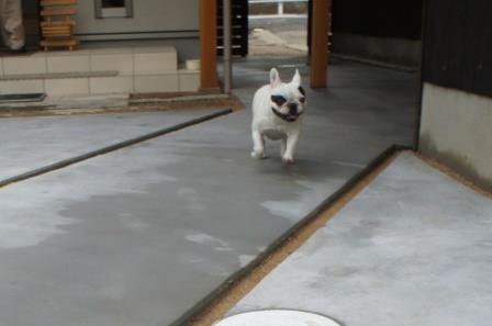 走り回っても大丈夫