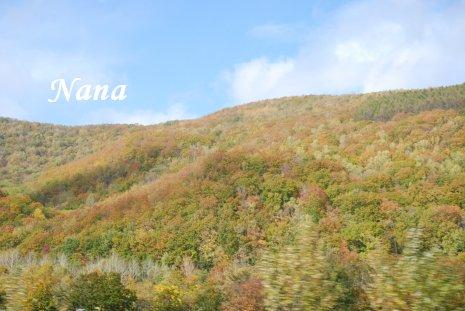 autumn20-1.jpg