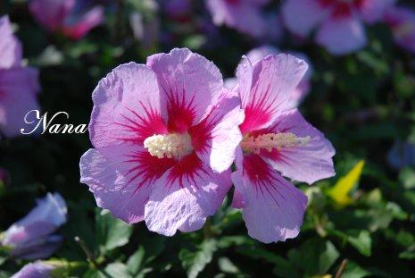 flower20-21.jpg