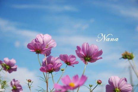 flower20-22.jpg