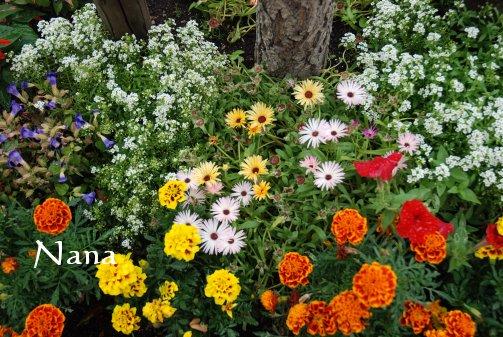 flower20-8.jpg