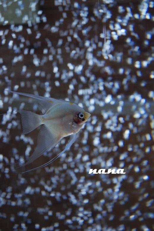 sea20-11.jpg