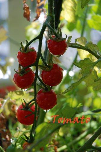 tomato20-2_20130722223841.jpg