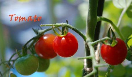 tomato20-4_20130722223838.jpg