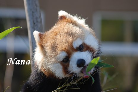 zoo20-43.jpg