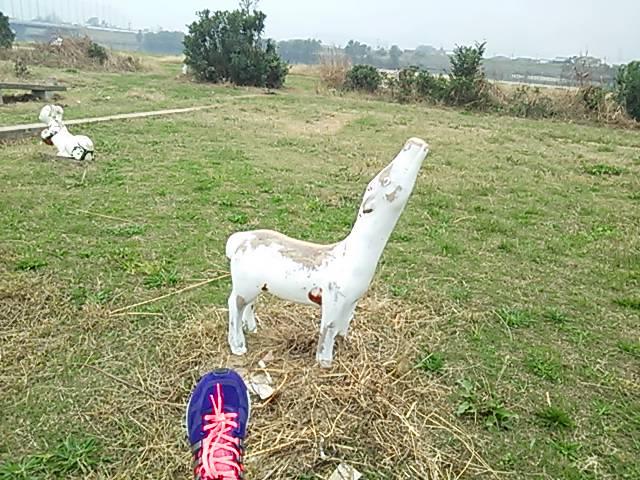 加古川の白馬