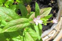 myflowers09133
