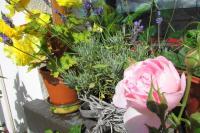 myflowers09136