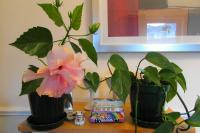 pinkhybiscus0913