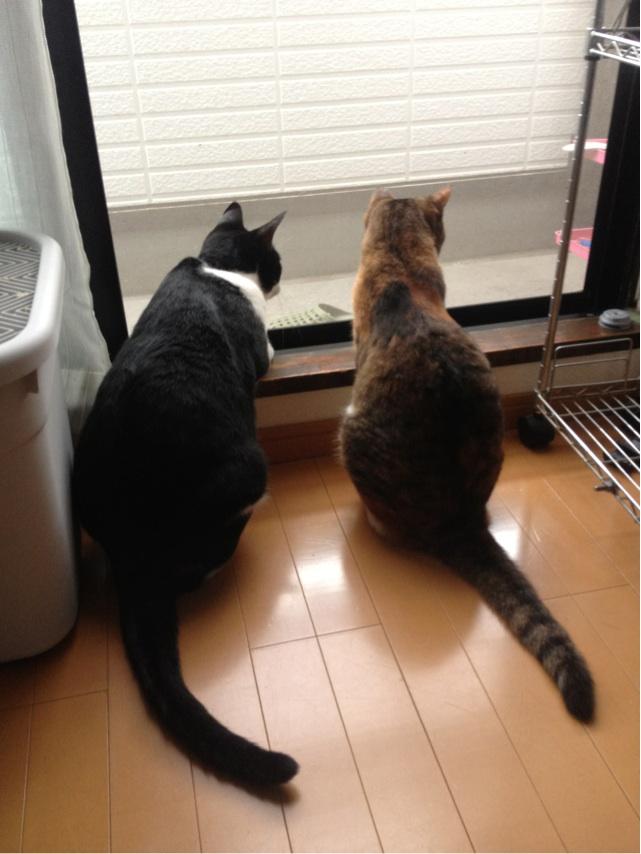 銀杏君と桜ちゃん2
