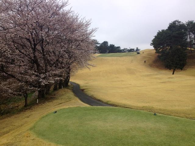 藤岡ゴルフ 桜