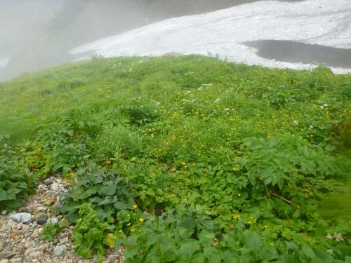 お花畑と雪渓(2)