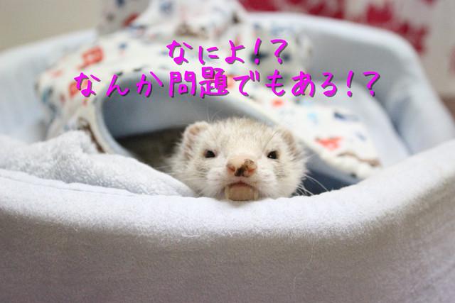 kako-ai3Hs06EAwCl1X9L.jpg