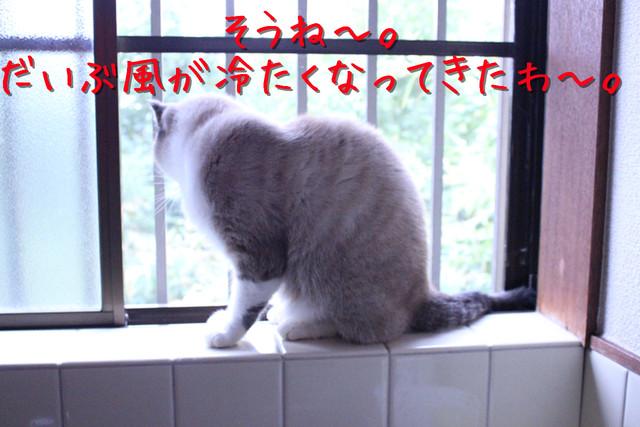 kako-kFQznUdNbayXU4ie.jpg
