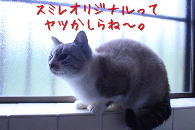 kako-rn7HScMmXNZ8Nwix.jpg