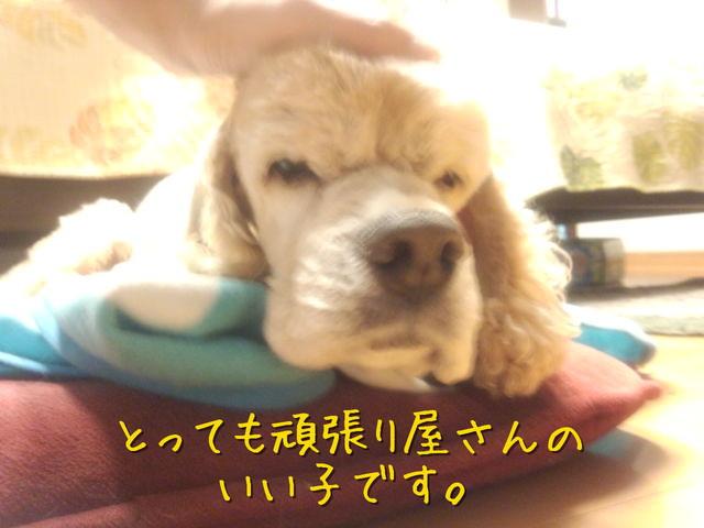 kako-yCr8lYKo5bpFJLol.jpg