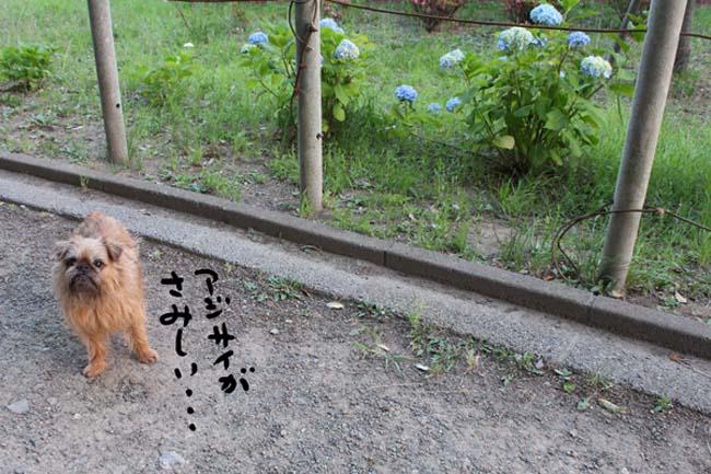 002-azisai-3.jpg