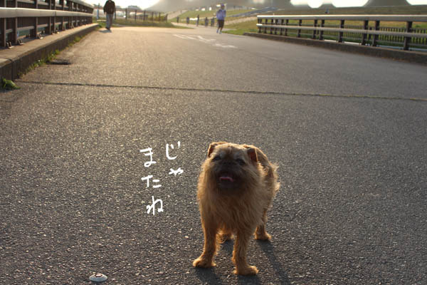 003-nanohana-8.jpg