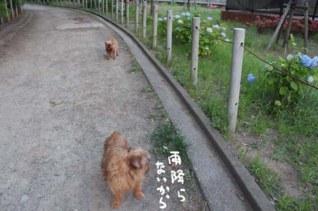 004-azisai-2.jpg