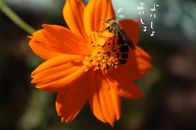 009-amedasu-2.jpg