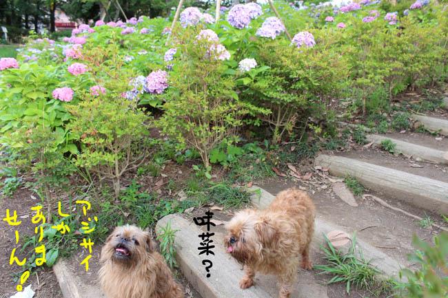 010-syoubu-6.jpg