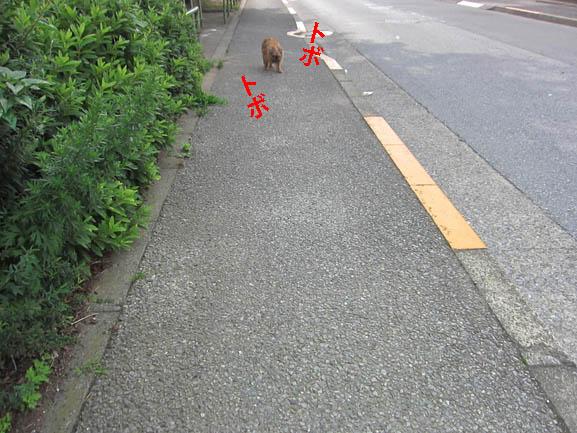 014-yuuuru-2.jpg