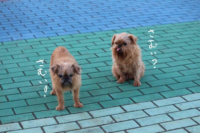 018-sanpo-4.jpg