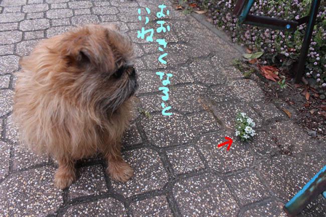 022-1-azisai-4.jpg