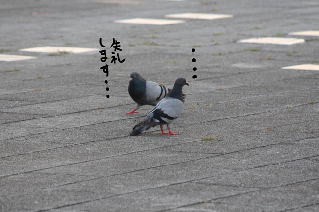 026-aisunon-88.jpg