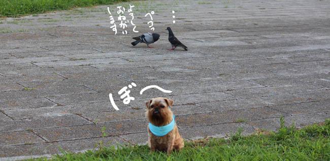 027-aisunon-9.jpg