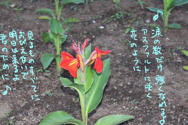 038-genki-8.jpg