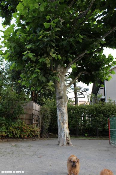 046-hasiru-3_20130716074020.jpg