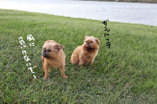 051-daisagi-7.jpg