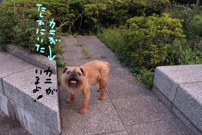 052-kani-3.jpg