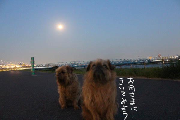 063-mayoi-8.jpg