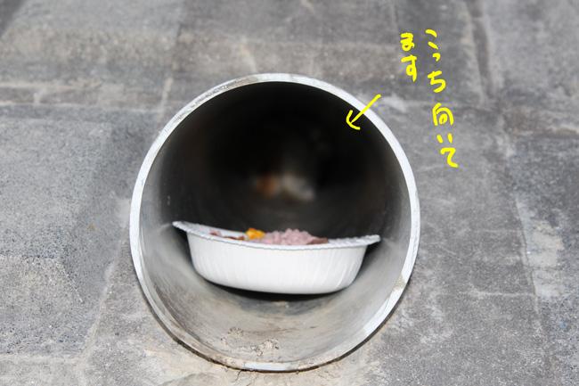 105-arisu-10.jpg