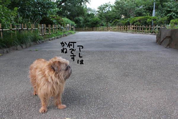 122-yanagi-2.jpg