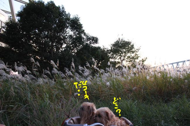 123-hare-7.jpg